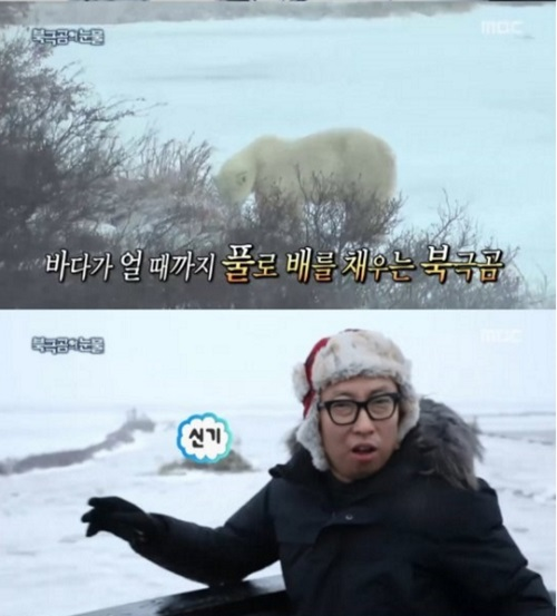 infinite-challenge-pergi-ke-kutub-untuk-lihat-beruang